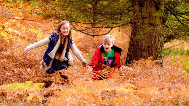 Wakehurst's woodlands (Image: Jim Holden)