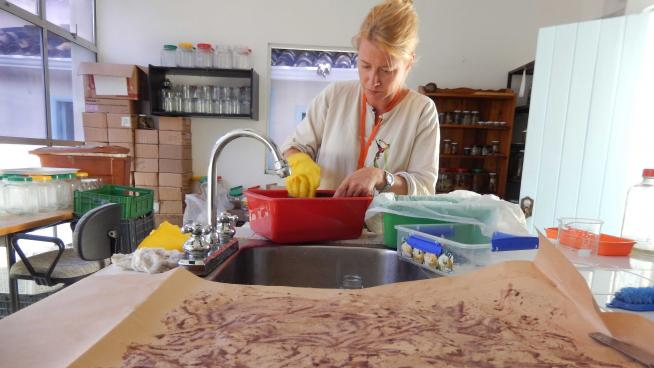 Image showing Cleaning the first seed collection in the new laboratory of the Boyacá Seed Bank