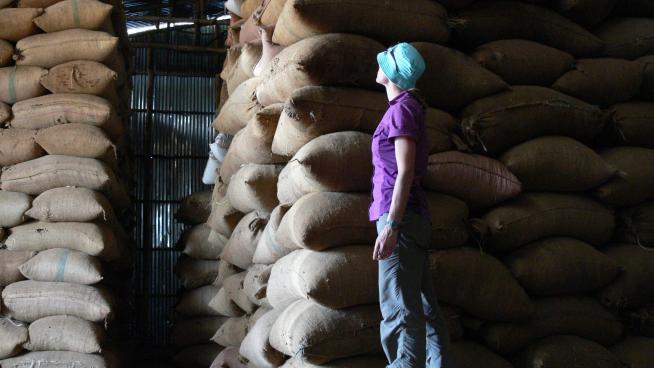 Hulled and dried coffee in a Yayu warehouse, awaiting transportation (Image: A. Davis, RBG Kew).