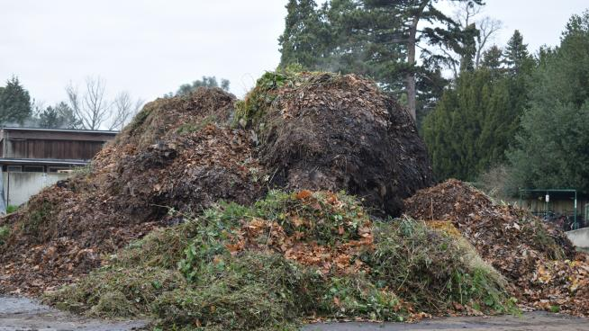 Plant waste waiting to be shredded