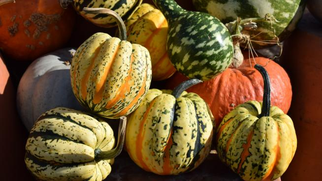 Pumpkins in the Kitchen Garden