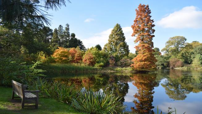Kew's lake in autumn