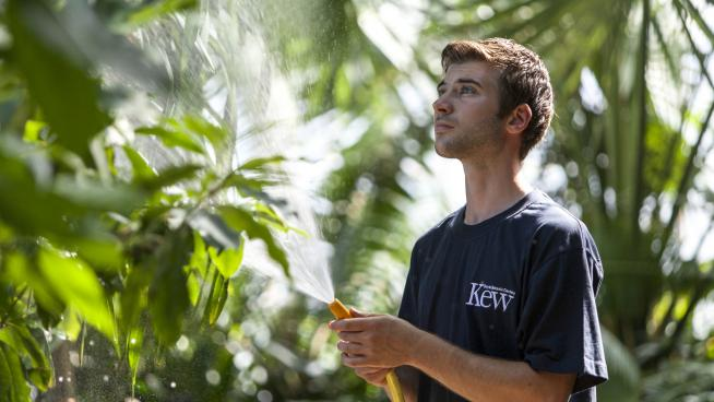 Diploma student in the Palm House