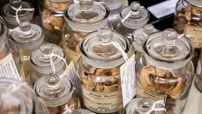 Economic Botany Collection