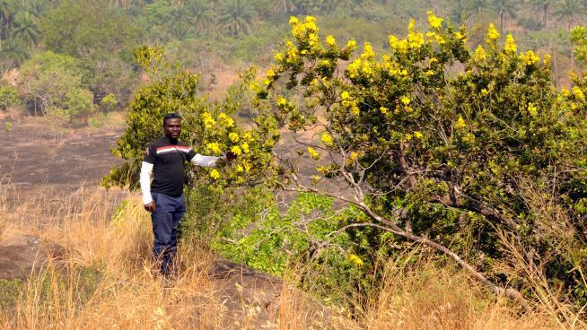 Image showing Pepe with Fleurydora felicis near the village of Koba Pastoria.