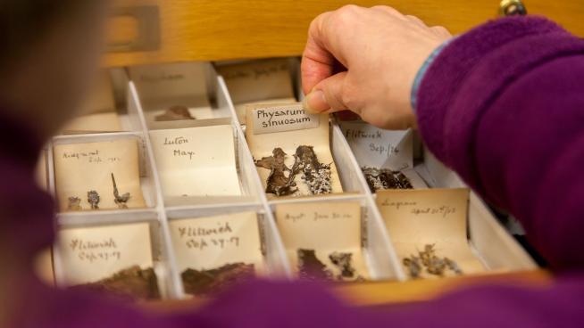 Specimens in Kew's Fungarium