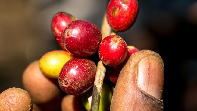 Alan Schaller, Union Hand-Roasted Coffee