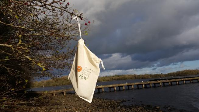 Image showing Seed collecting bag filled with hawthorn berries