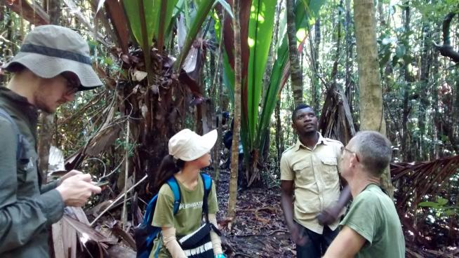Kew scientists and students at work in Madagascan forest