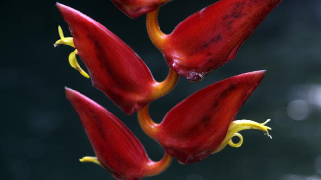 A plant found in a Colombian expedition