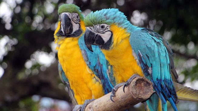 Parrots in Colombia