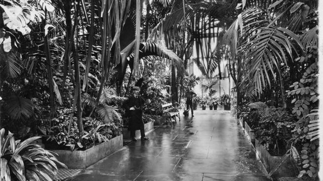 Two staff members inside the Palm House in 1900