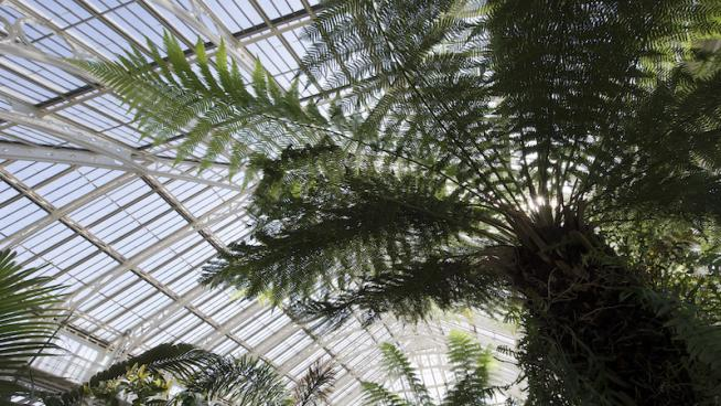 Interior of the Temperate House
