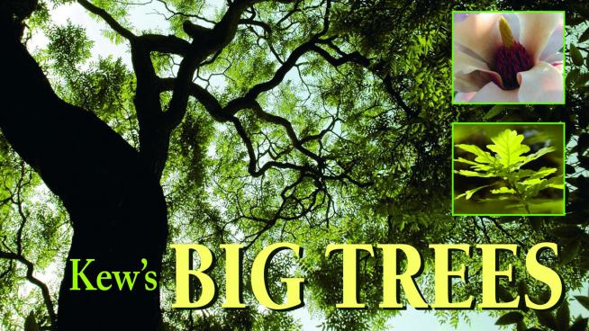 A guide to Kew's iconic trees its arboretum.