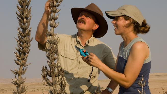 Seed collecting in Namibia