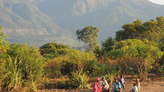 A ridge of the Chimanimani Mountains, viewed from a school compound in the Zomba area (Photo: M.Cheek)