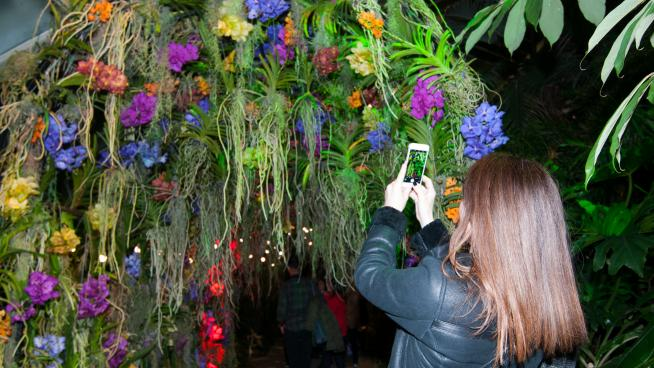 Orchid Festival After Hours 2019 orchids