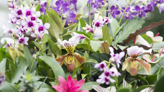 Orchids Festival at Kew