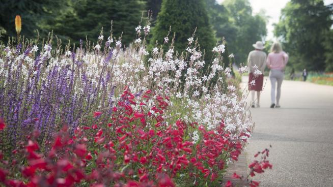 A Friend taking photographs in the Gardens