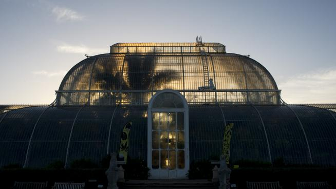 Palm House glasshouse
