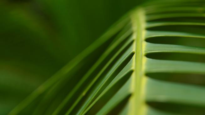 Palm House leaf up close