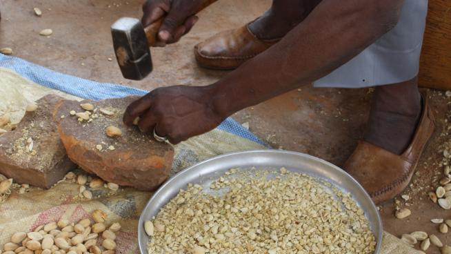 Preparation of Balanites aegytiaca seed for use as a natural pesticide