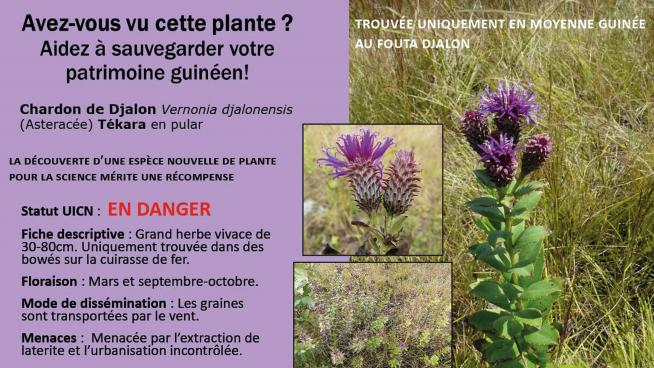 image showing Poster used for the Regional Flower Campaign of Vernonia djalonensis