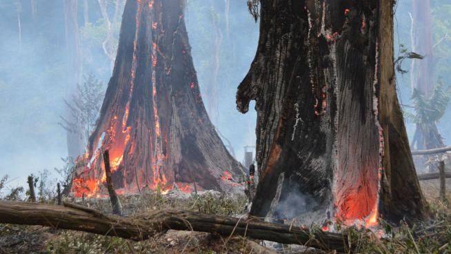 Image showing burning forest trees, being cleared to make way for agriculture