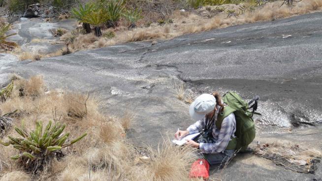 Image showing Kew botanist Jo Osborne documenting the plants of the granite slopes including Euphorbia mlanjeana and Plectranthus cucullatus