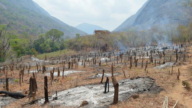 Image showing a cleared patch of woodland in the foothills of the Ribaue Mountains immediately after burning