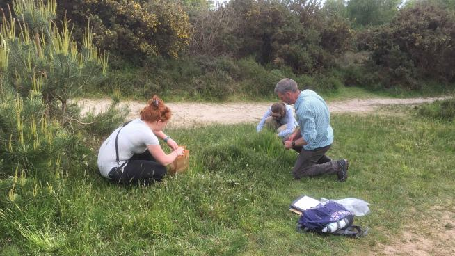 image showing Phase 2 is now under way, collecting seeds from creeping willow