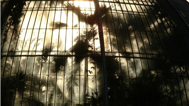 Steamy Palm House