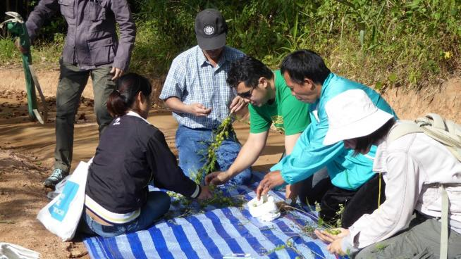 Working with partners to collect seeds in Thailand