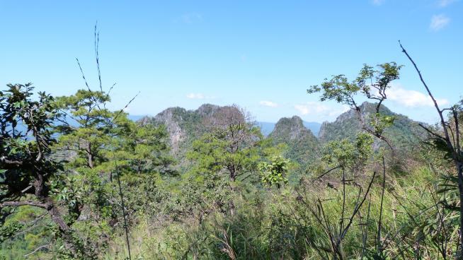 Fieldwork in Thailand (Image: Ruth Clark)