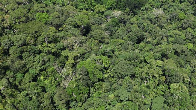 Aerial view of tropical forest (Image: William Milliken)