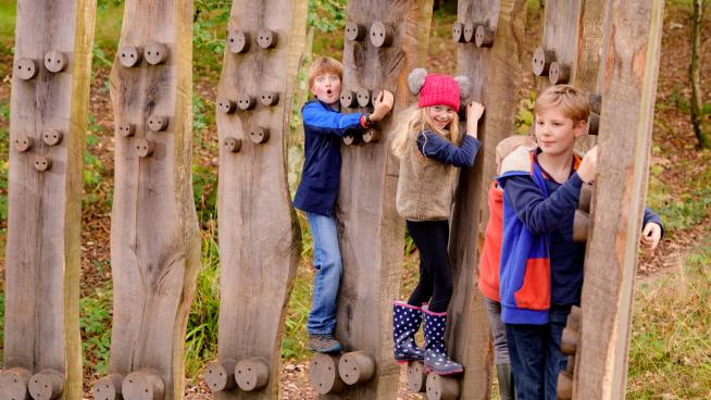 Wakehurst's autumn tree trunk trek