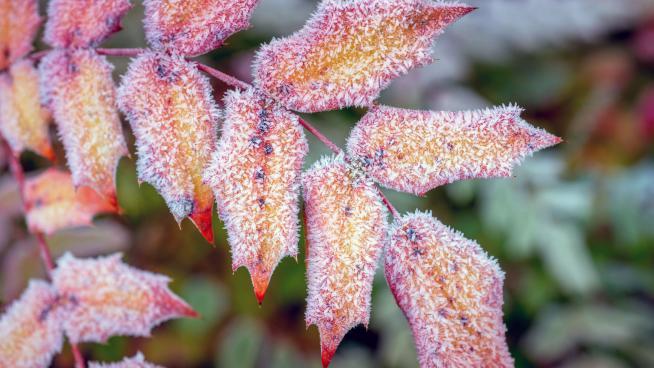 Winter at Wakehurst (photo: Jim Holden)