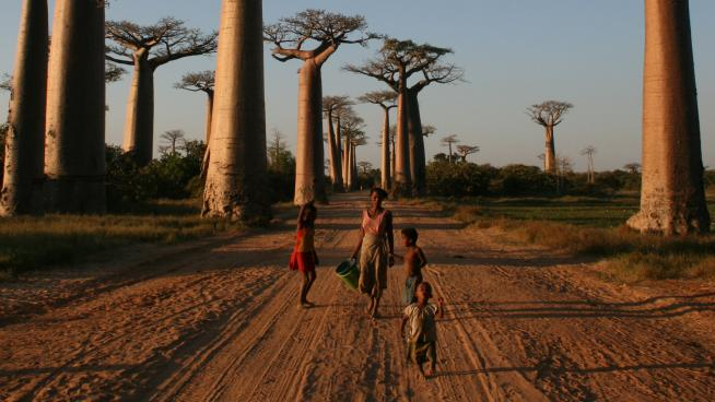Local people on the Avenue of the Baobabs, Morondava, Madagascar (Credit: Gavin Evans, licensed under CC-by-SA 3.0)