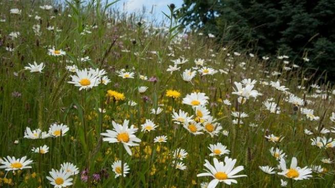 Wild flowers at Wakehurst