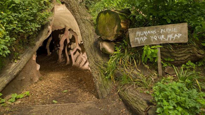Badger sett at Kew