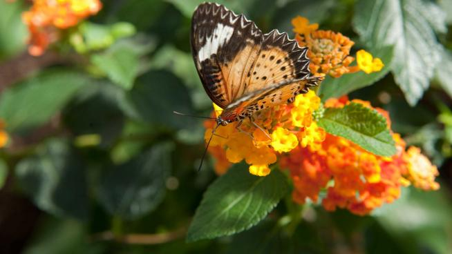 Butterfly pollinating flowers