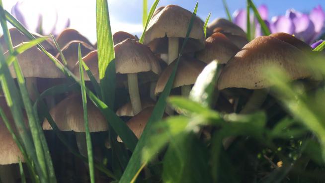 Fungi and crocuses