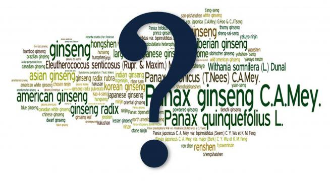 Ginseng wordle