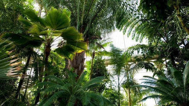 Inside the tropical Palm House