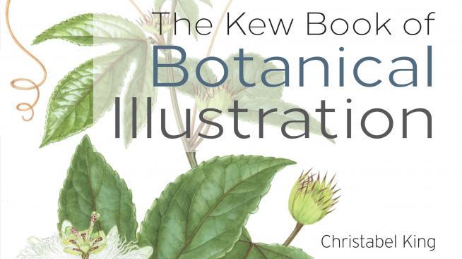Kew Book of Botanical Illustration, Christabel King