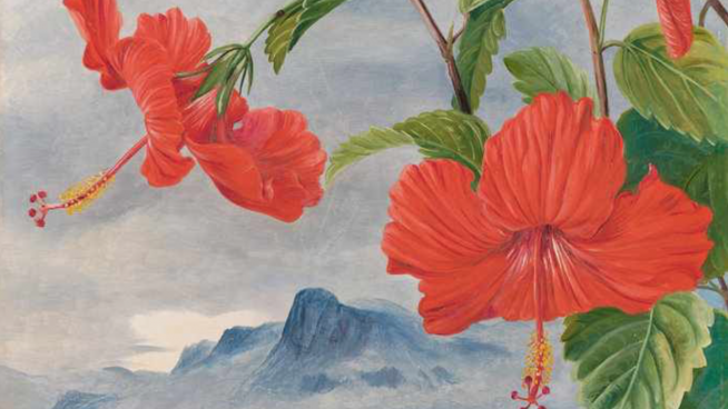 Detail from no488 by Marianne North: Mandrinette and mountain home of the Pitcher Plant in the distance