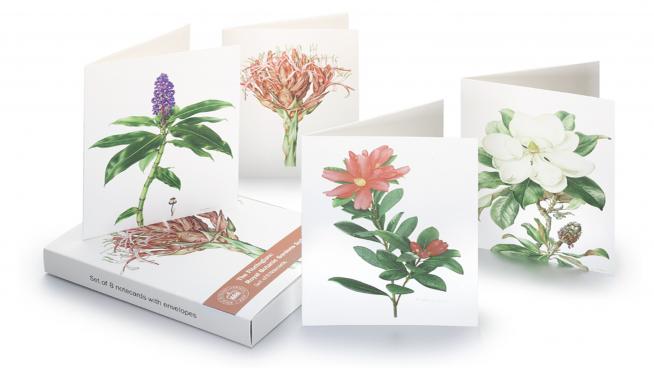 Florilegium Notecard Wallet, Floral