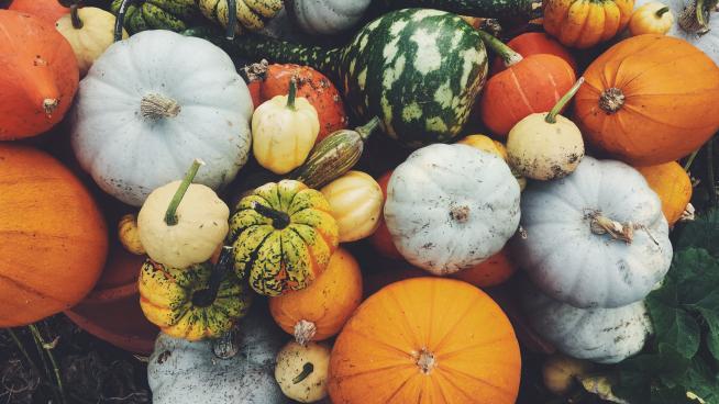 Pumpkin display in the Kitchen Garden