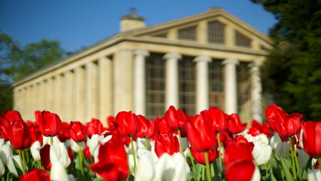 Tulip plantings in front of the Nash Conservatory at Kew