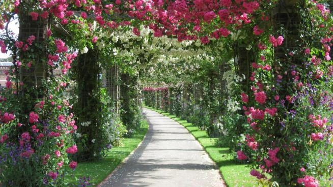 The rose pergola at Kew Gardens